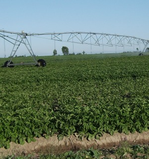 Efficient irrigation with pF curve